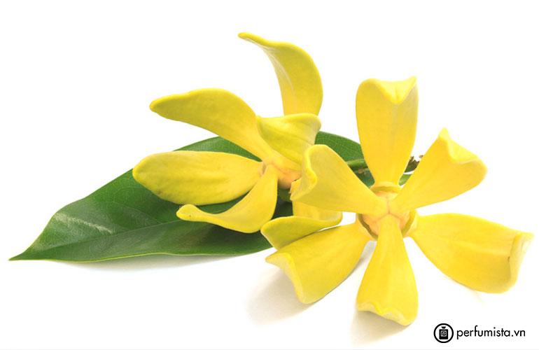 Hoa ngọc lan tây