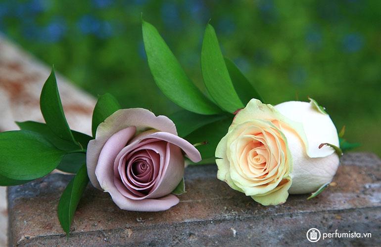 Hoa hồng de Mai (tháng năm)